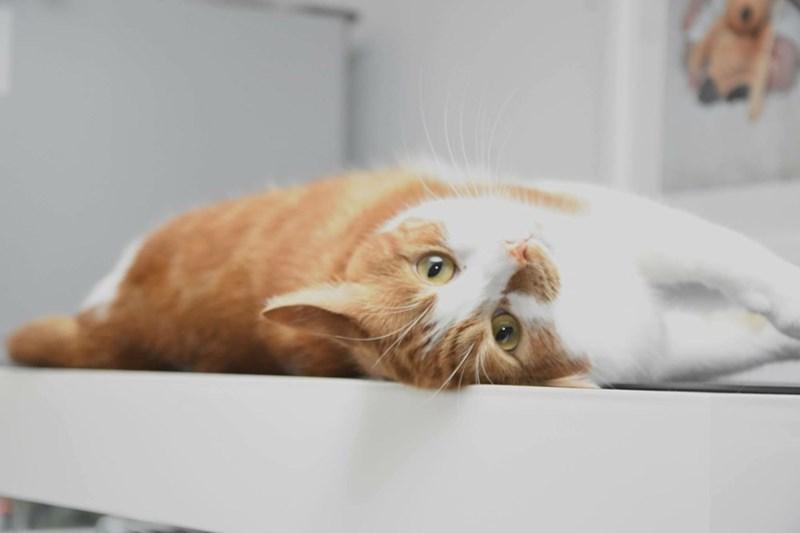 Cats - 8966105600