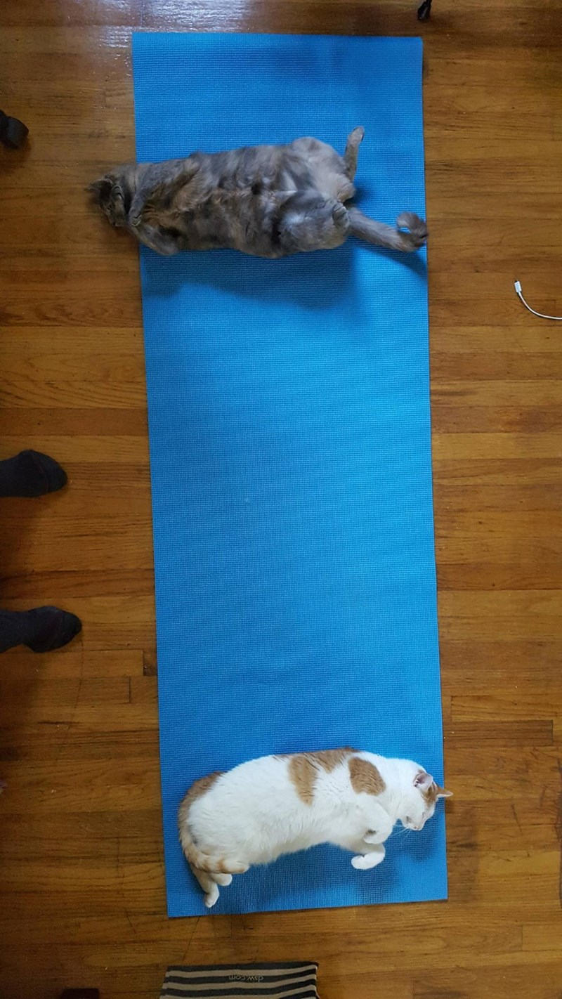 Cats,yoga