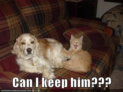 keep,cat,dogs,can,him,caption