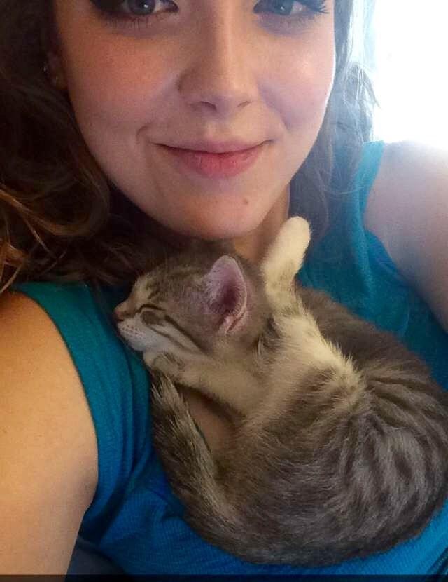 tiny kitten Cats - 8966157312