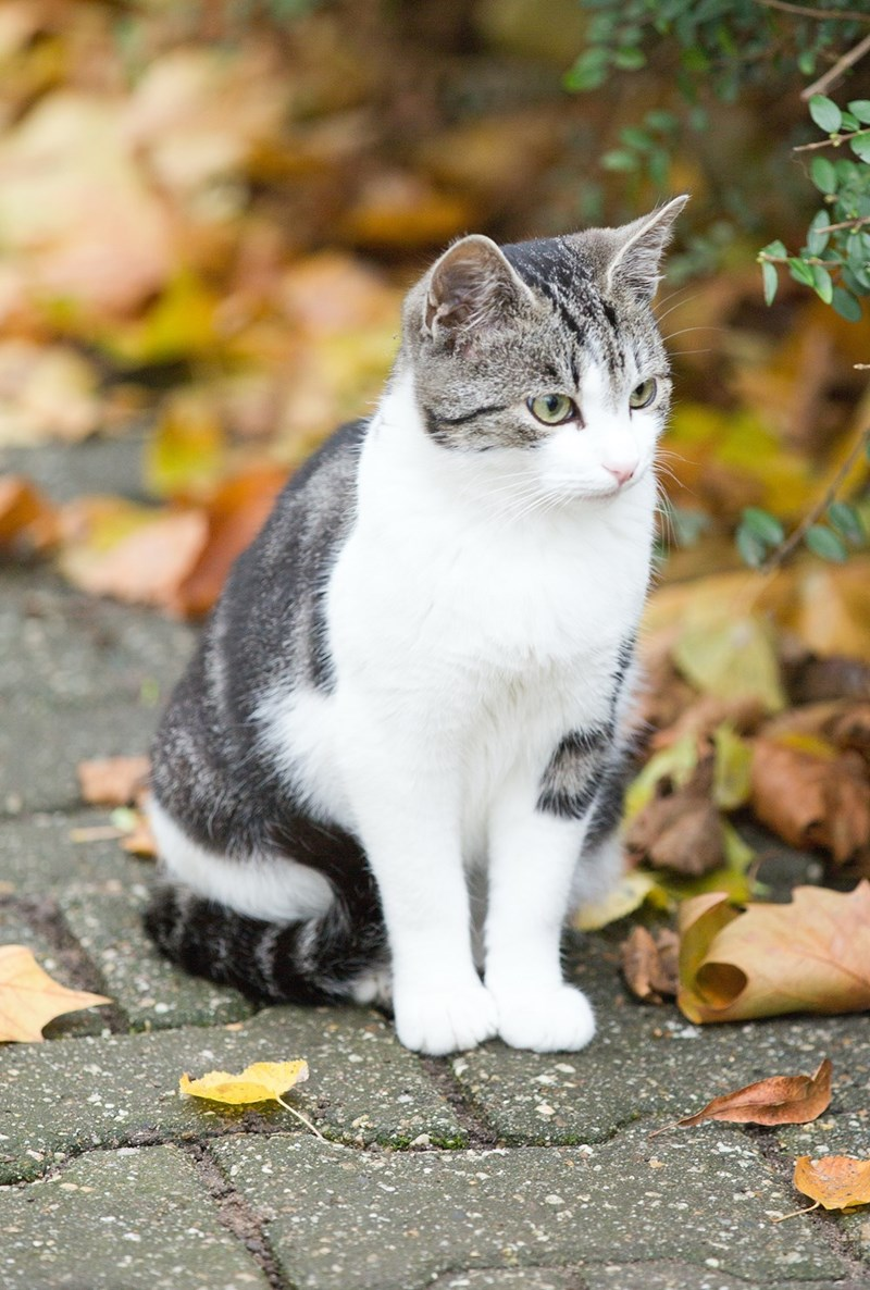 leaves Cats fall - 8966165504