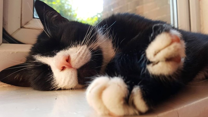 Cats sleeping - 8966173440
