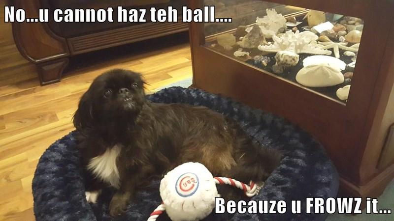 No...u cannot haz teh ball....  Becauze u FROWZ it...