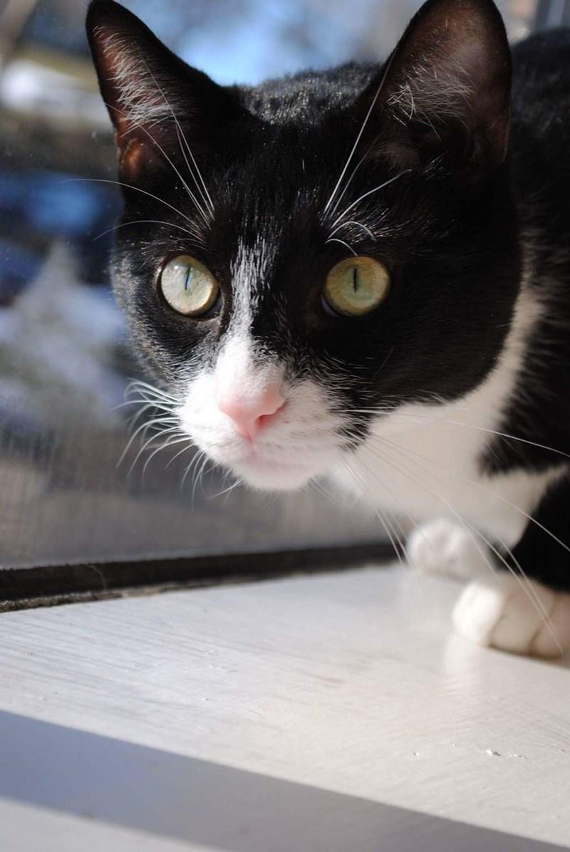 Cats - 8966225408