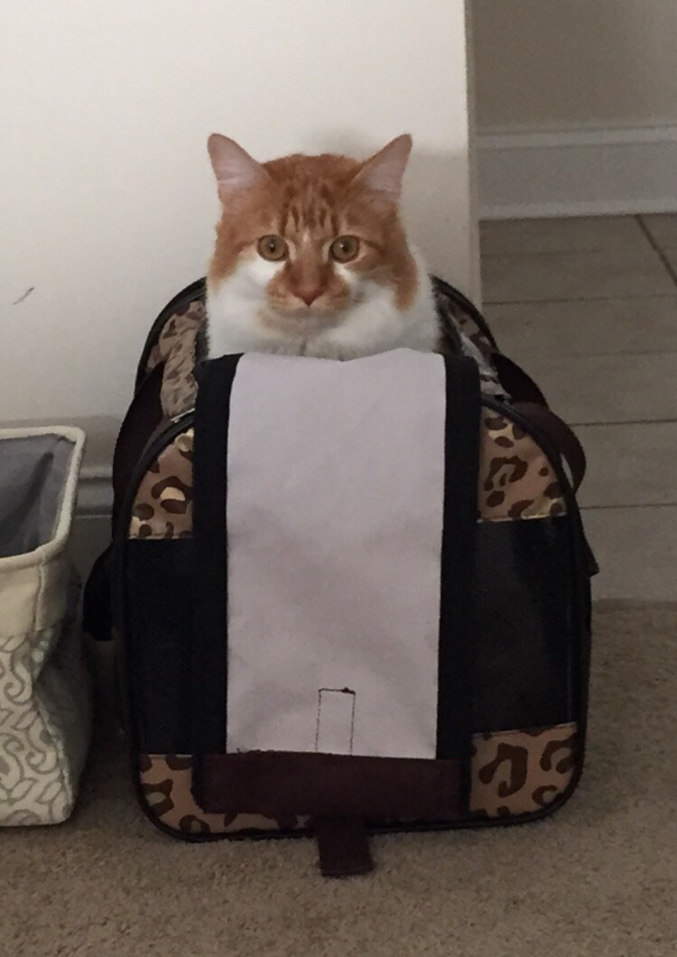 bag Cats - 8966229248