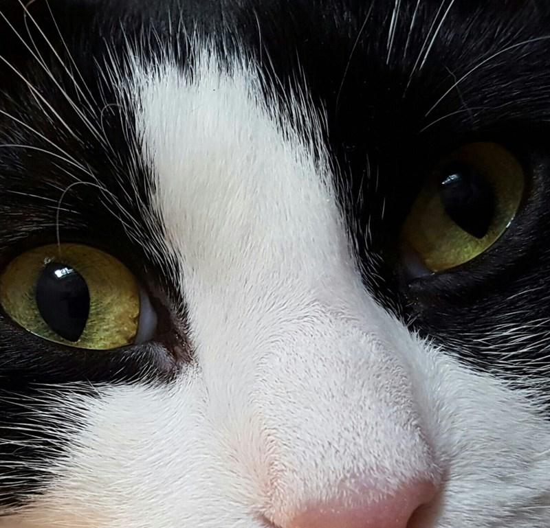 close up Cats - 8966229504