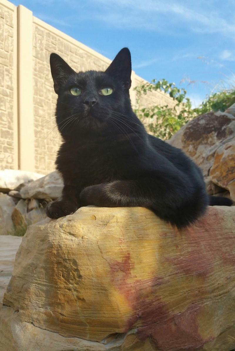 majestic Cats - 8966229760