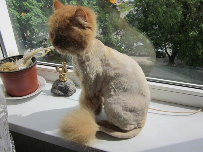 haircut lol Cats - 8966257664