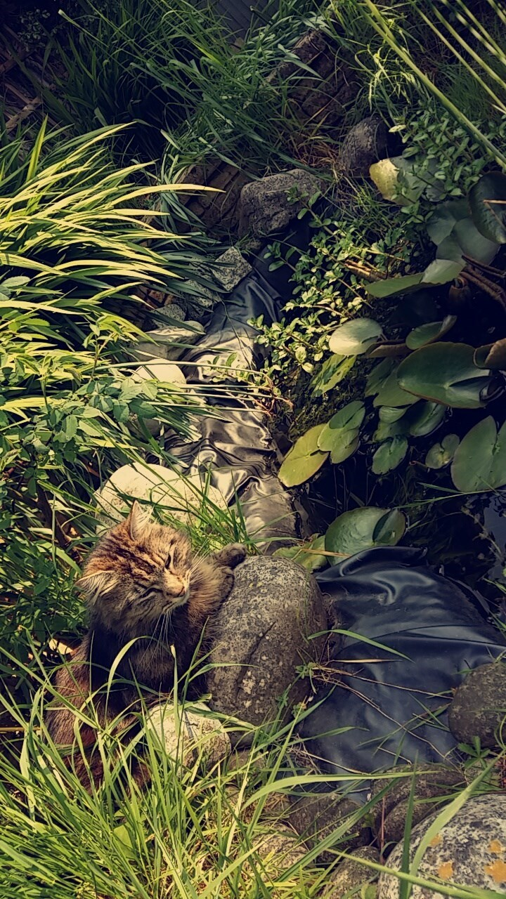 Cute picture of a cat enjoying the garden in the summer sun
