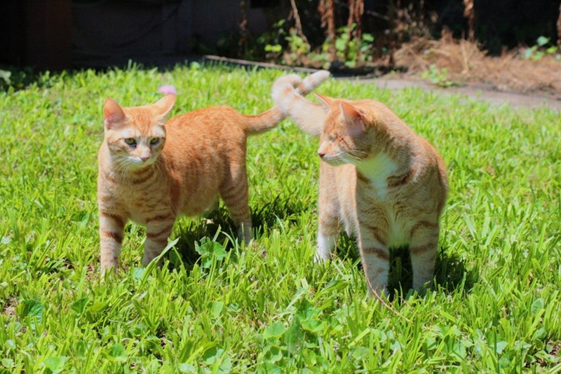 blind tails Cats - 8966287616