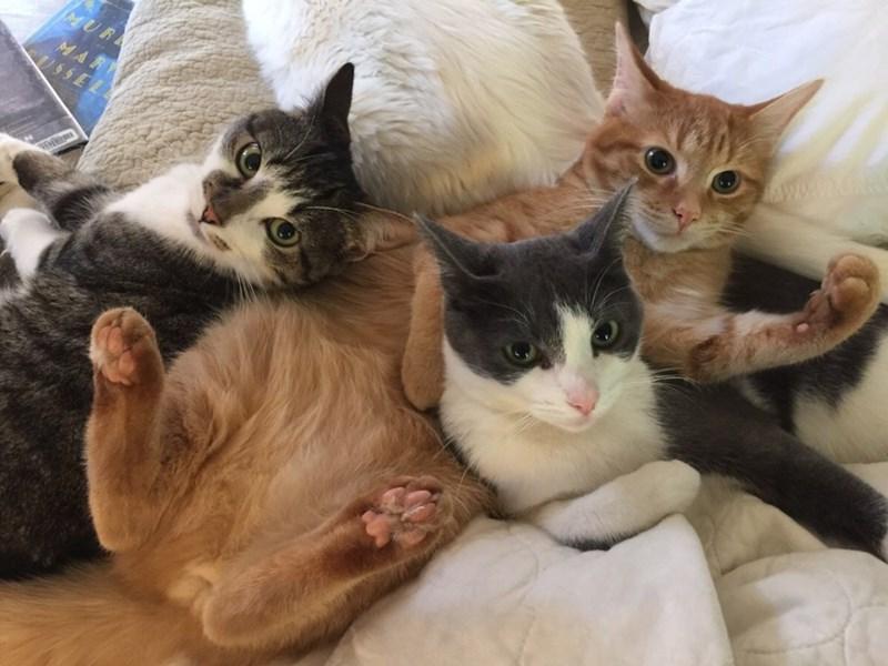 cuddle Cats - 8966301184
