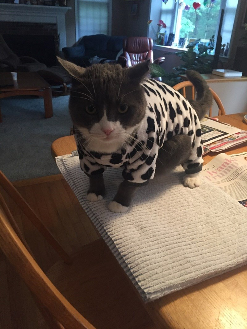 costume cow belly Cats - 8966310656
