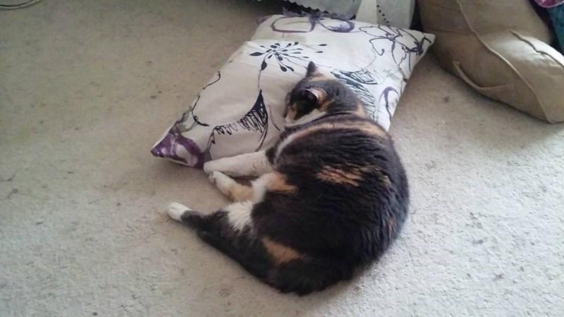 Pillow Cats - 8966312960