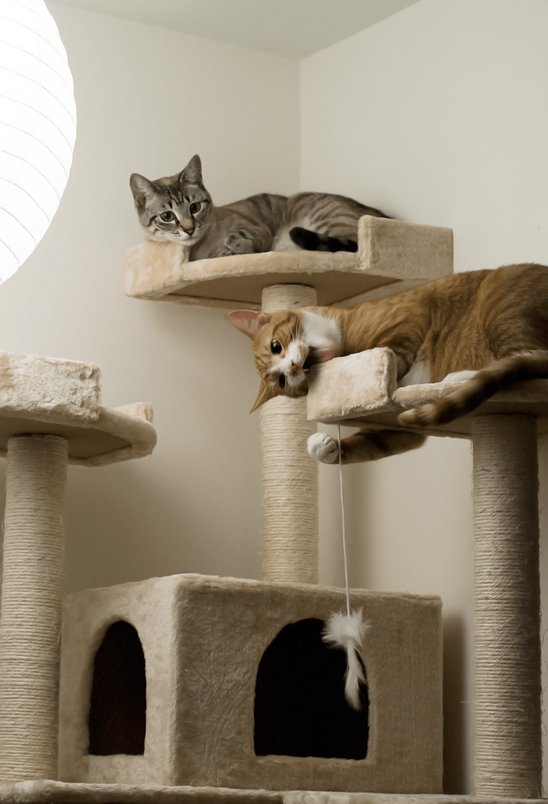 perch cat tree Cats - 8966366464