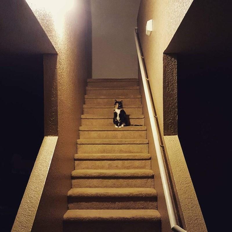 spooky creepy Cats - 8966387456
