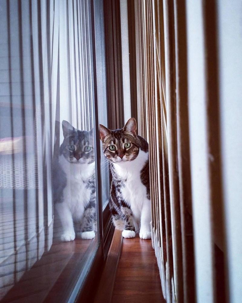 Cats pretty - 8966404608