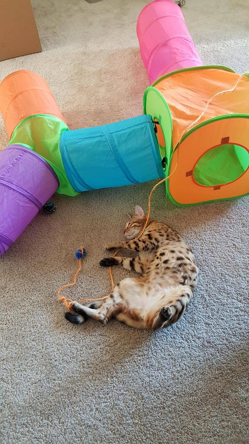 toys,napping,Cats