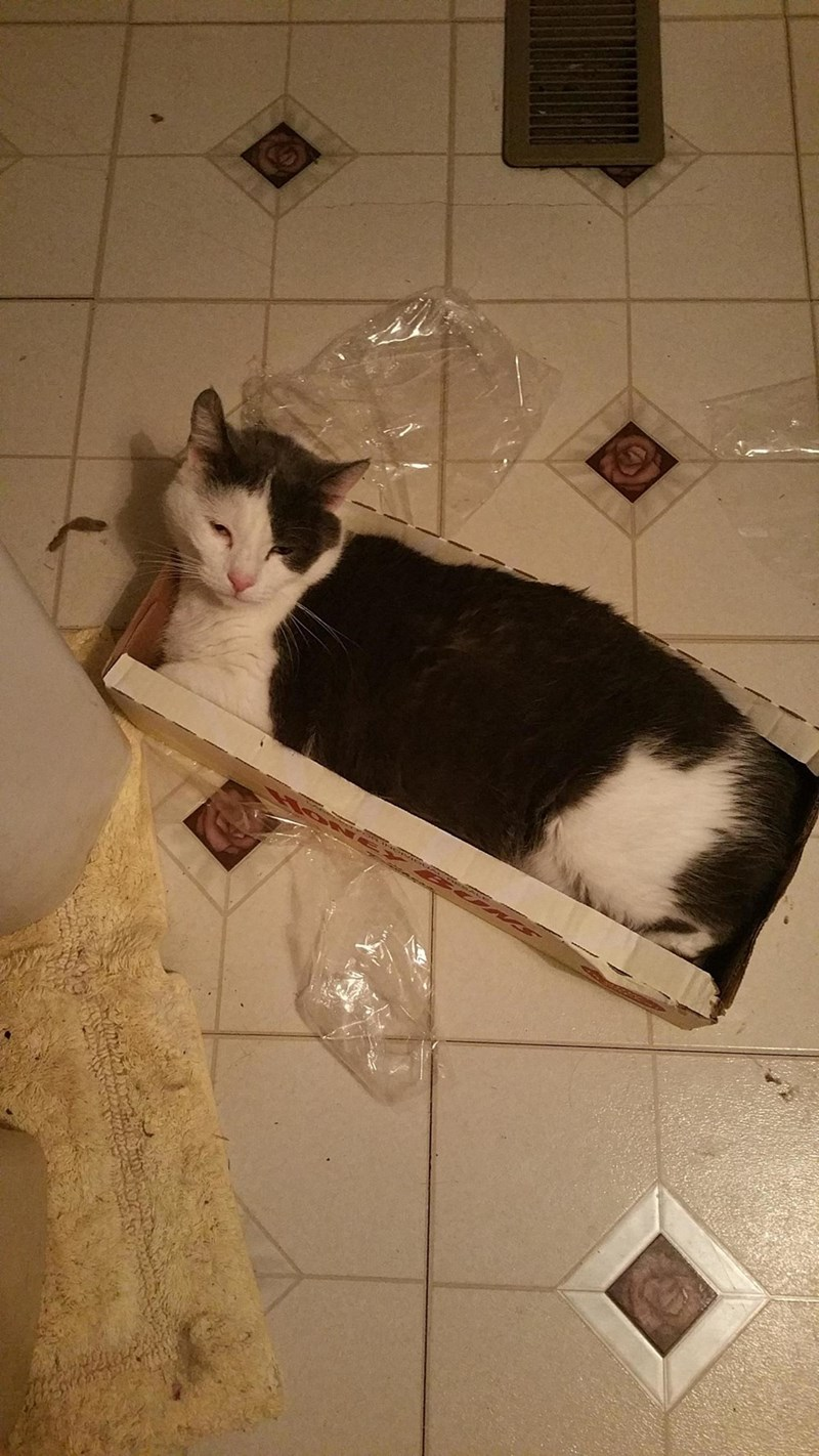 box mess Cats - 8966412032