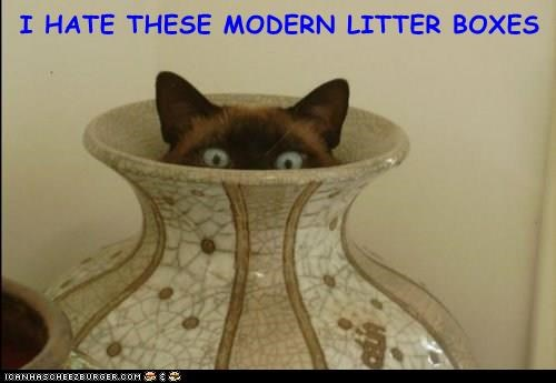 animals hate cat modern litter boxes caption - 8966432256
