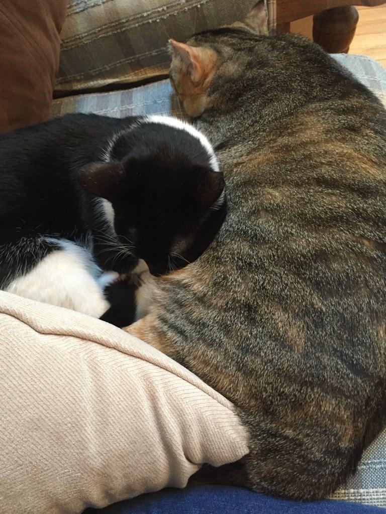 snuggle Cats - 8966461184