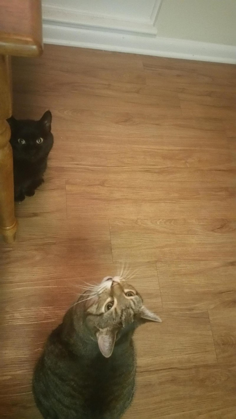 begging Cats - 8966461440