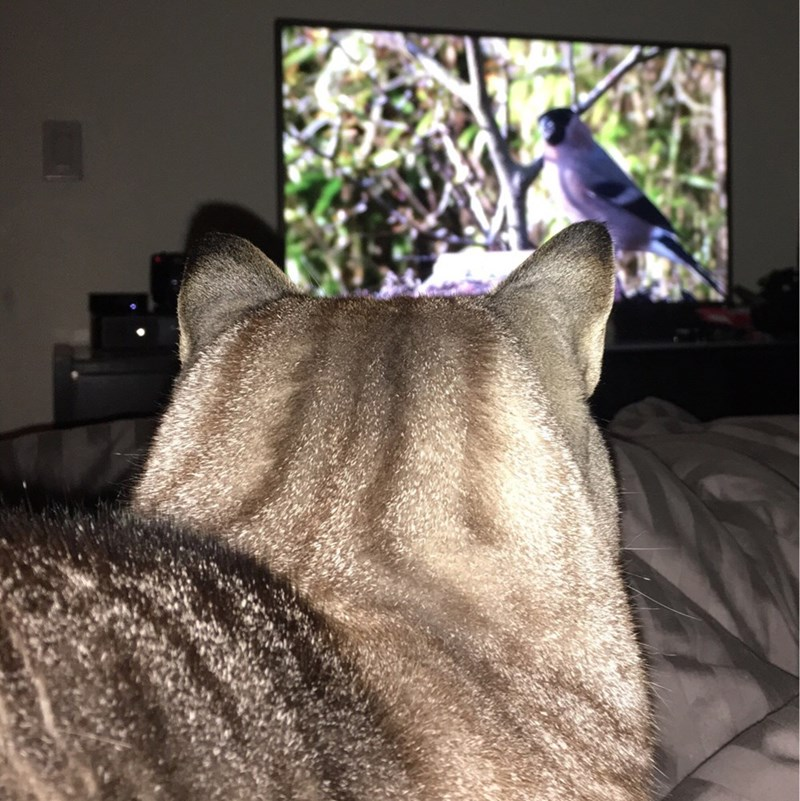 birds,TV,Cats