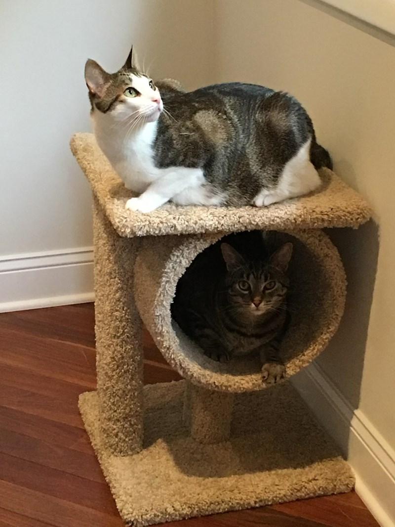 perch toys Cats - 8966499072