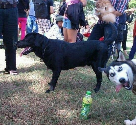 photobombing skill level expert