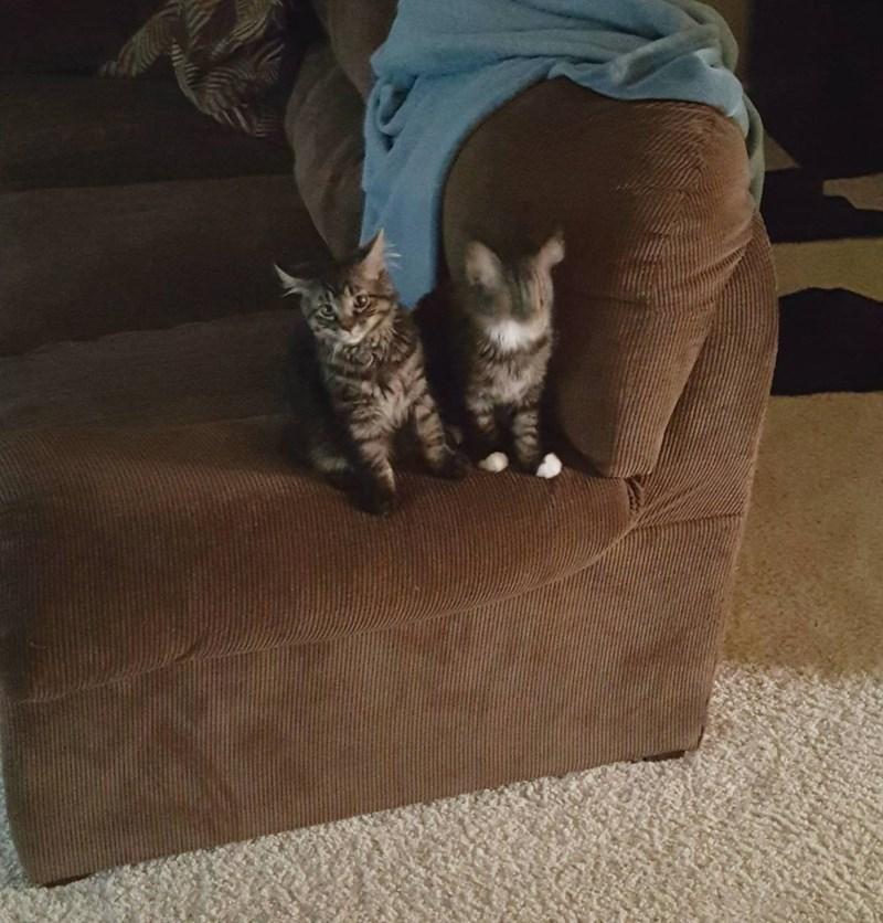 blur kitten Cats - 8966531840