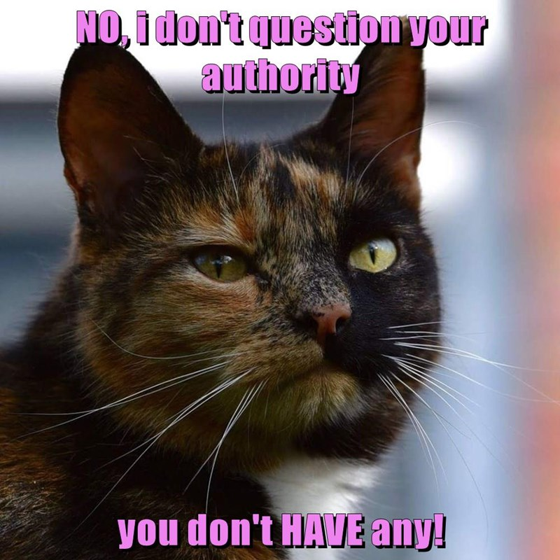 question,cat,authority,dont,caption
