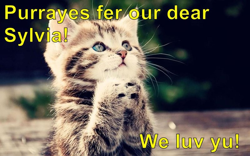 Purrayes fer our dear Sylvia!                          We luv yu!