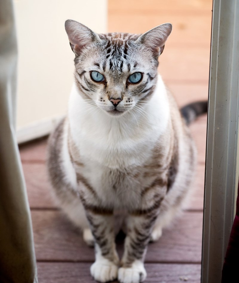 eyes Cats - 8966631424