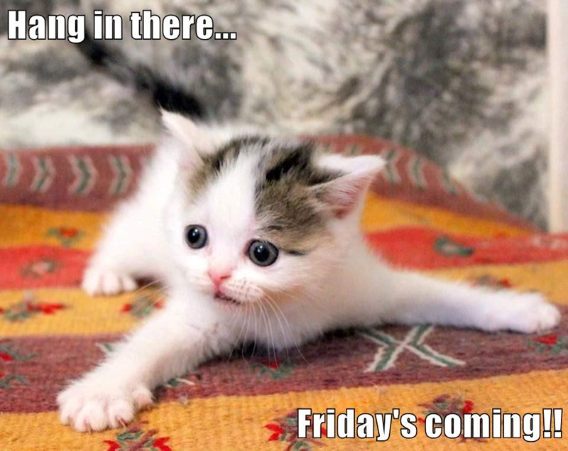 Hang in there...  Friday's coming!!