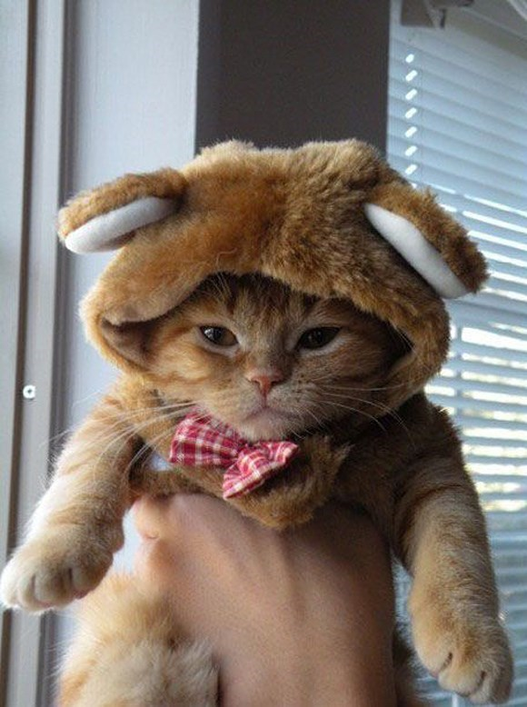 costume grumpy Cats hat