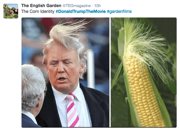 Adaptation - GRDINThe English Garden @TEGmagazine 10h The Corn Identity #DonaldTrumpThe Movie #gardenfilms