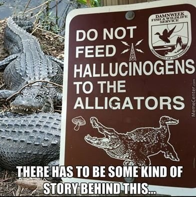 image alligator drugs Florida Problems