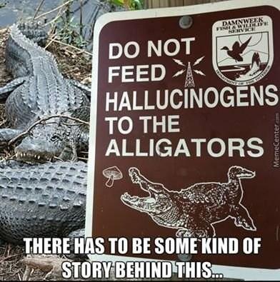 image alligator drugs Florida Problems