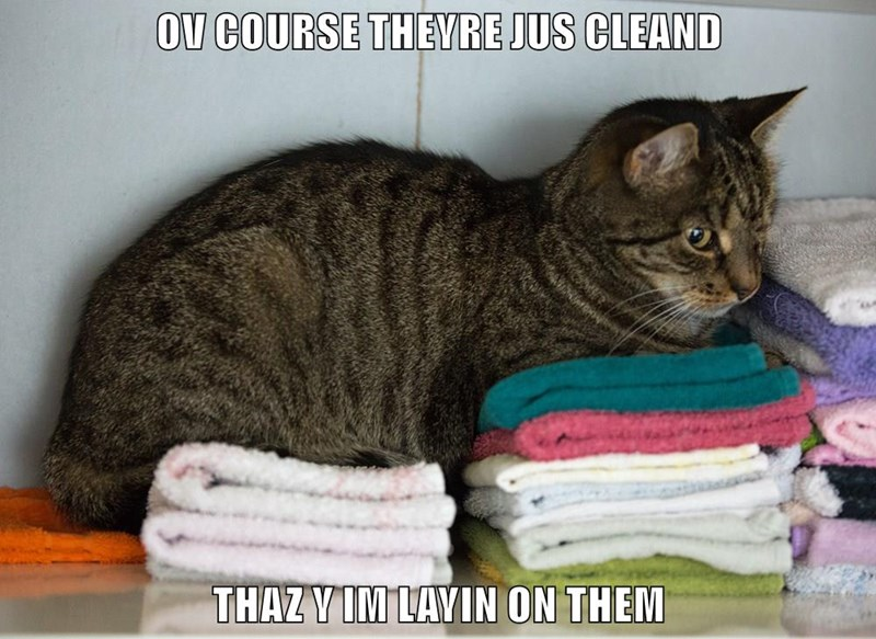 OV COURSE THEYRE JUS CLEAND  THAZ Y IM LAYIN ON THEM