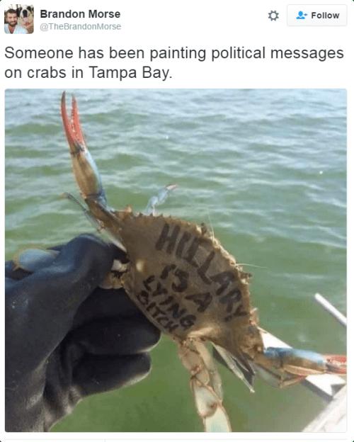 twitter,Hillary Clinton,crabs