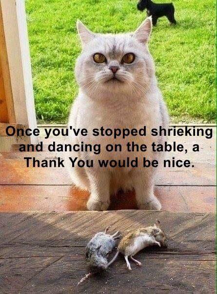Once you've stopped shrieking and dancing on the table, a Thank You would be nice.