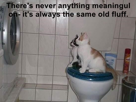 animals old fluff anything never forget meaningful caption Cats same