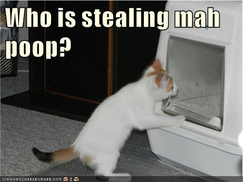 Who is stealing mah poop?