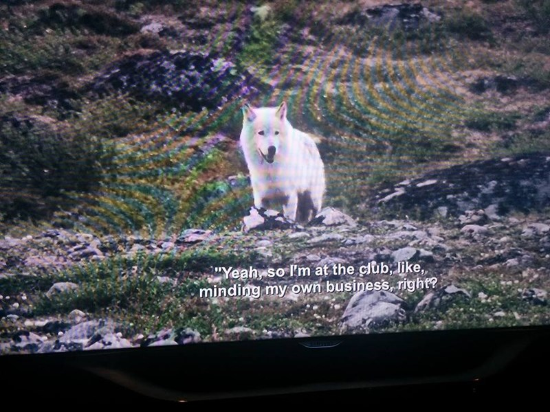 Mountain goat - Yeahy so Im at the club, like, minding my own business, right?