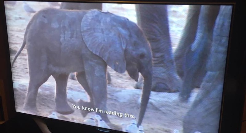 Elephant - You know I'm reading this.