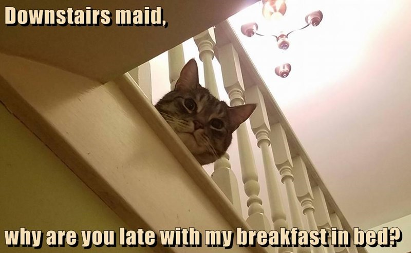 cat,breakfast,bed,maid,downstairs,caption,late