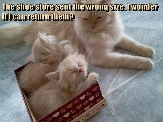 The shoe store sent the wrong size. I wonder if I can return them?