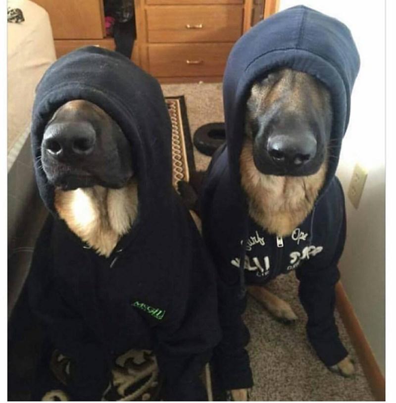 undercover k9 unit