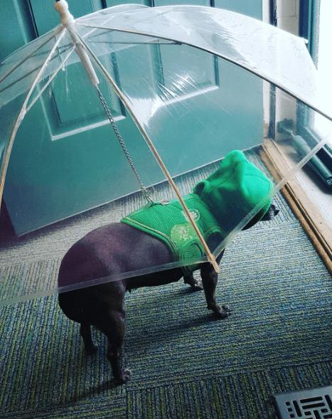 Umbrella - 1S