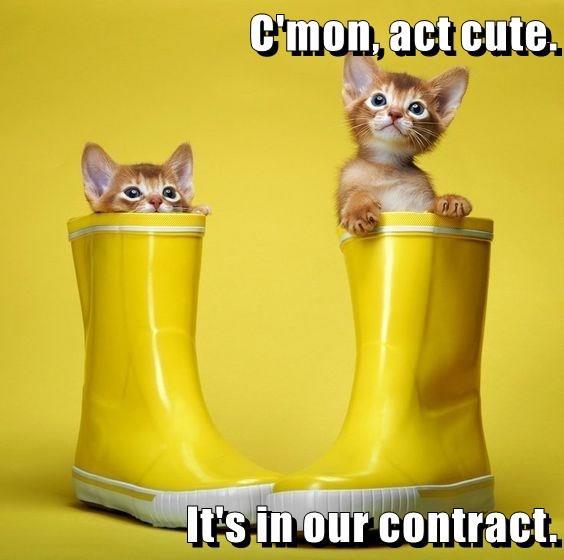 C'mon, act cute