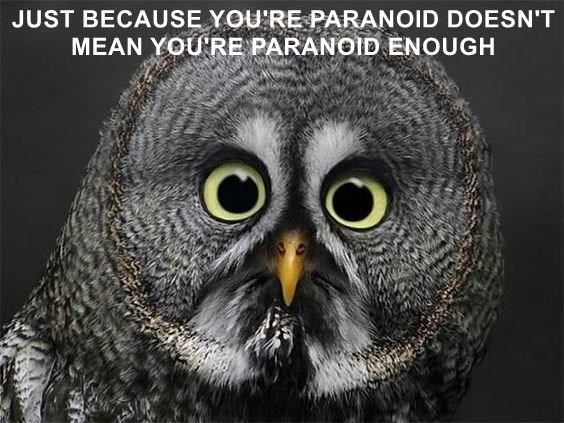Funny meme of an owl that is paranoid captioned to point out that just because you are feeling paranoid, doesn't mean that you are paranoid enough.
